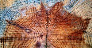 GReNES : Gestion des Ressources Naturelles, Environnements et Sociétés
