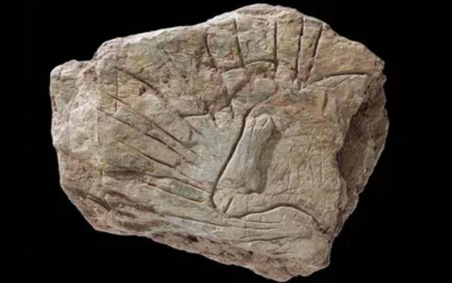 Du nouveau à l'Ouest : l'art paléolithique du Rocher de l'Impératrice (Plougastel-Daoulas, Finistère)