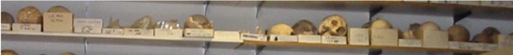 Collection ostéoarchéologique conservée au Cepam.