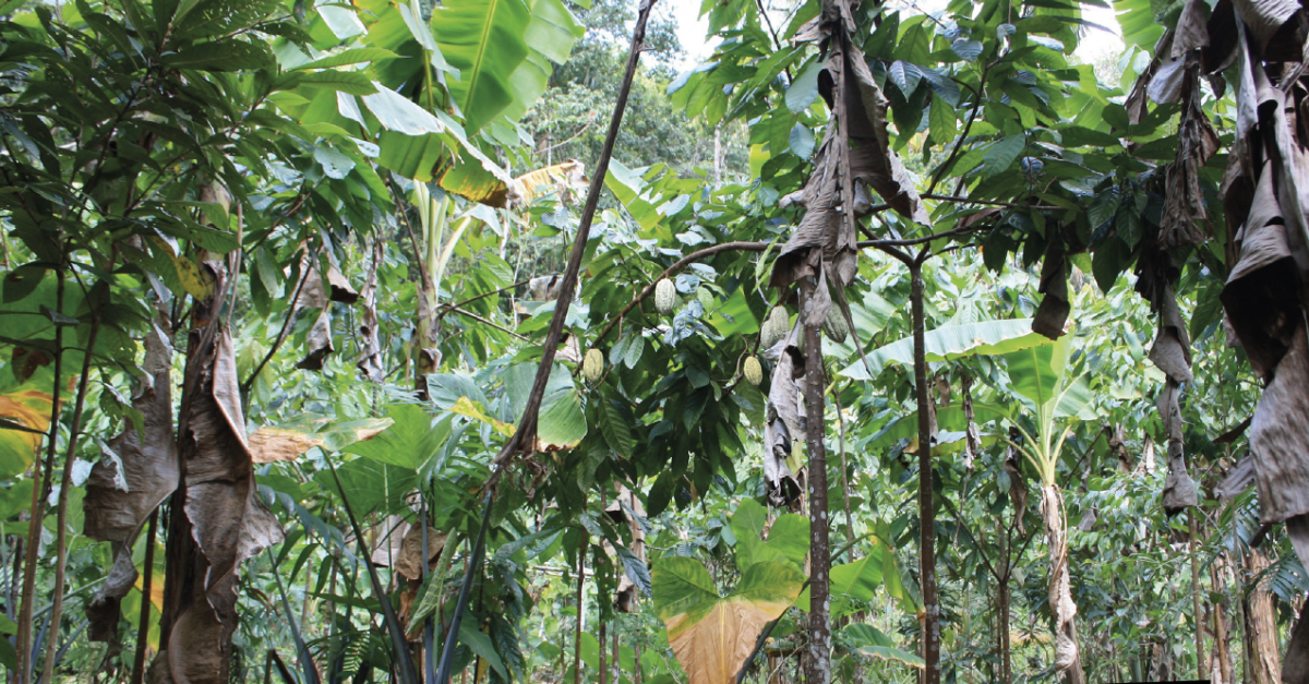 Call for Papers   Tropical Agriculture : Past and Present