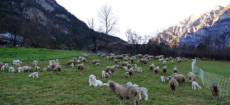Soutenance Thèse | Système d'élevage et pastoralisme en Provence et dans les Alpes méridionales durant la Protohistoire : nouvelles perspectives en archéozoologie