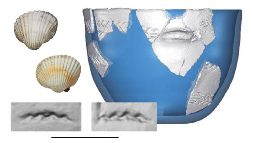 Soutenance Thèse | Systèmes de production céramique des premiers paysans du  domaine liguro-provençal (VIeme millénaire BCE) : traditions techniques  des décors